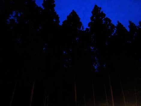 eveningforest.jpg